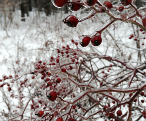 cherry, frozen, and ice image