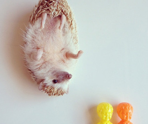 animal, toy, and cute image