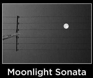 moonlight and sonata image