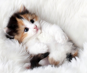 cat, cute, and animal image