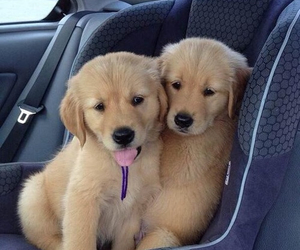 dogs, puppy, and sweet image