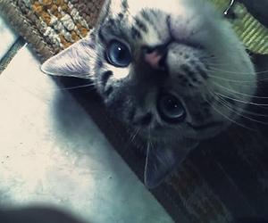 cat, feline, and gato image