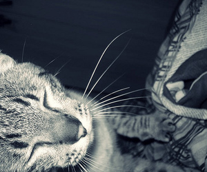 cat, cokinho, and cute image