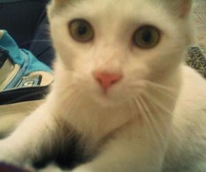 cat, cute, and brankinho image