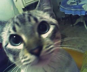cat, gato, and cokinho image