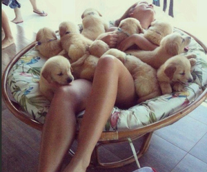 clothes, girl, and dogs image