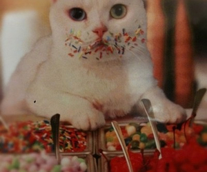 cat, sweet, and candy image