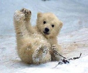 snow, bear, and cute image