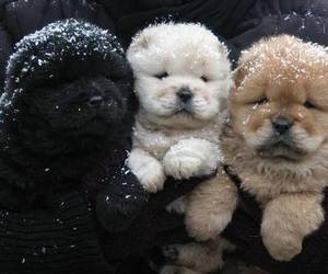 dogs, lovely, and cute image