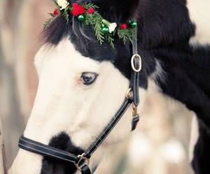 animal, christmas, and horse image