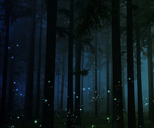 forest, fireflies, and night image
