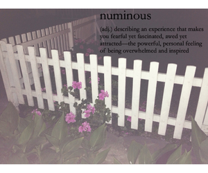 fence, flowers, and grunge image