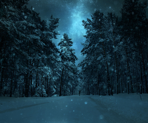 forest, night, and winter image
