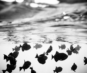 fish, water, and black and white image