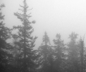 cold, dark, and fog image