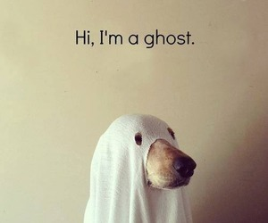 boo, dog, and ghost image