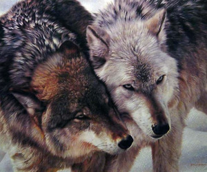 nature, animal, and wolf image