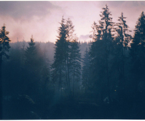 forest, poison, and nature image
