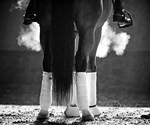 black and white, equestrian, and horse image