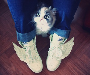 cat and shoes image