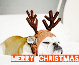 bulldog, christmas, and cold image