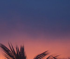 palm trees, photography, and sunset image