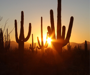 cactus, cool, and photo image