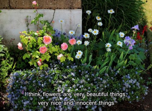 garden, flowers, and text image