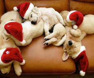 adorable, christmas, and puppies image
