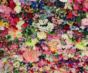 flowers and colors image