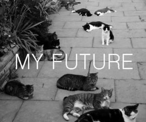 cats, my future, and kitty image