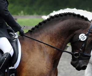 dressage, horse, and show image
