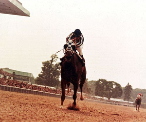 horse, Secretariat, and horse racing image