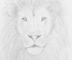 animal, paint, and white image