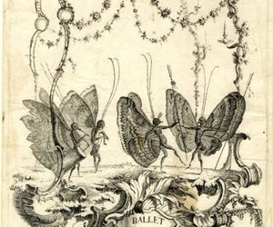 butterflies, etching, and wings image