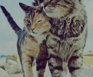 cats and couple image