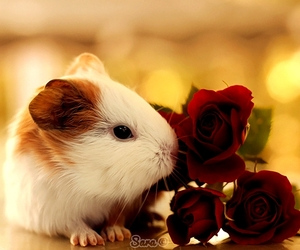 animals, for you, and lovely image