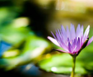 bokeh, flowers, and nature image