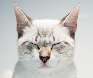 cats and white image