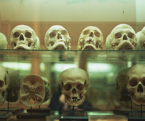 skull, indie, and photography image