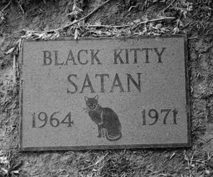 satan, cat, and kitty image