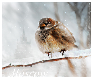 bird, cold, and grey image