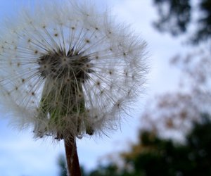 dandylion, photography, and flower image