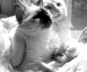black and white, kitty, and sunlight image