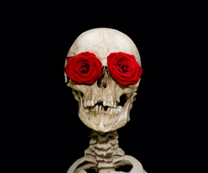 skull, red, and rose image
