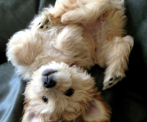 adorable, fluffy, and puppy image