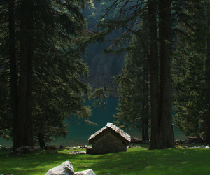 amazing, forest, and cabin image