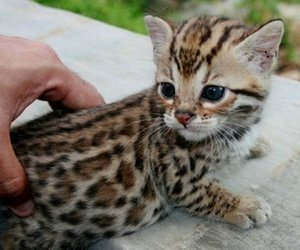 adorable, baby, and leopard image