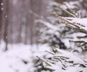 christmas, winter, and xmass image