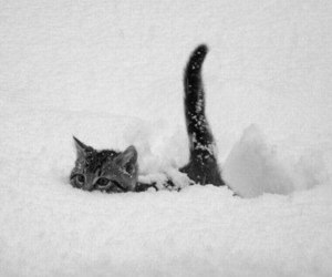 kitten, snow, and cute image